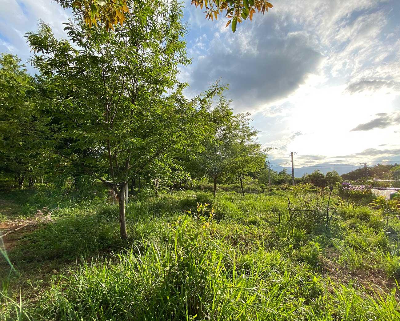 森と果樹と野菜と多くの生き物、そして人間が共生するFood Forest